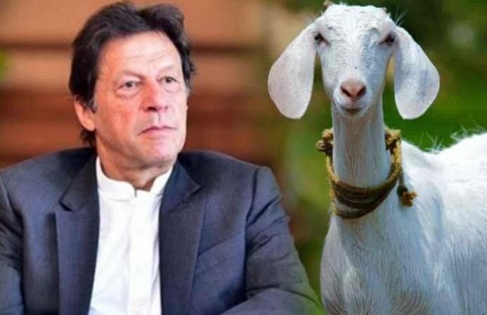 imran pk इमरान के पाक पाकिस्तान में बकरी से सामूहिक बलात्कार बकरी की मौत हो गयी , क्या बकरी को भी बुरखा पहनना चाहिए ? कुछ दिन पहले इमरान बोले थे अश्लीलता बलात्कार का वजह